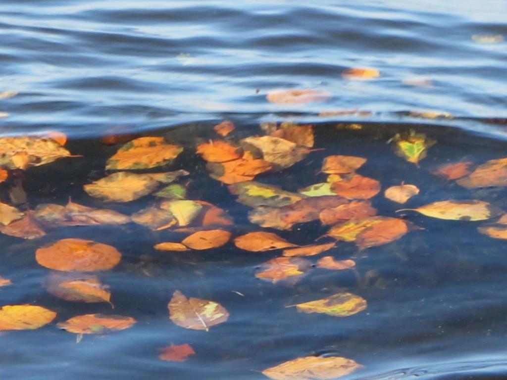 Blätter imWasser