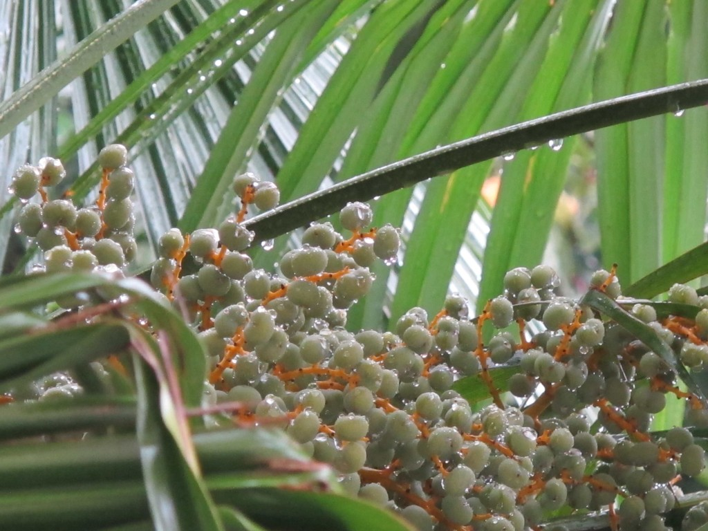 Palme im Regen